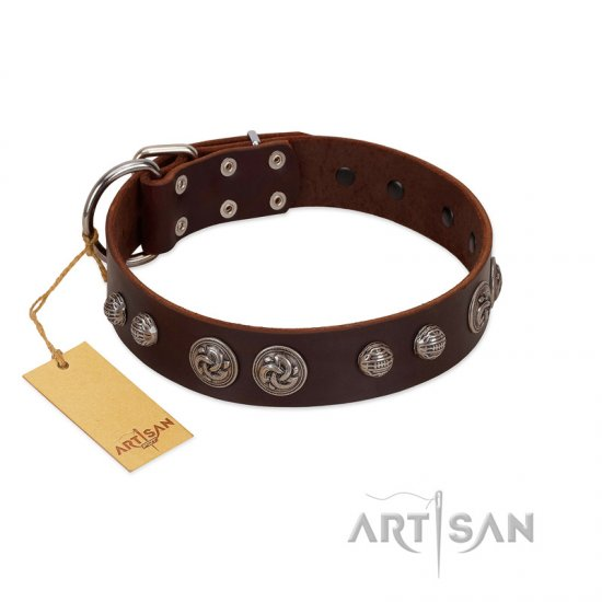 """Choco Brownie"" FDT Artisan Brown Leather Rottweiler Collar Adorned with Silver-Like Conchos"