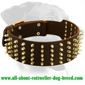 Extra Wide Deluxe Leather Collar for Rottweiler