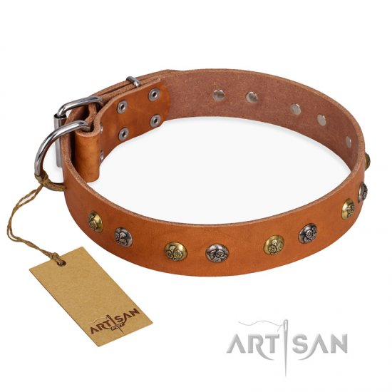 'Golden'n'Silver Luxury' FDT Artisan Leather Rottweiler Collar with Engraved Studs