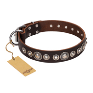 """Step and Sparkle"" FDT Artisan Leather Rottweiler Collar Adorned with Fancy Studs"