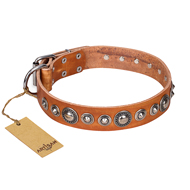 'Daily Chic' FDT Artisan Tan Leather Rottweiler Collar with Decorations