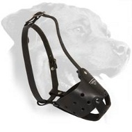Leather Rottweiler Muzzle for Frequent Use