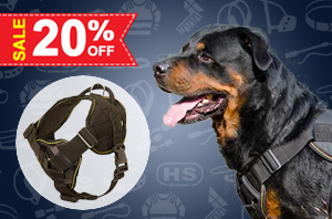 Nylonr Dog Harness