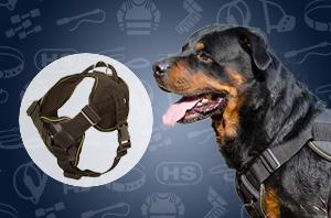 Rottweiler harness