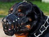rottweiler leather dog muzzle