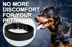 Rottweiler Leather Collar