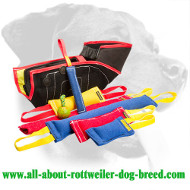 Rottweiler Must-Have Training Set for Maximum Effectiveness