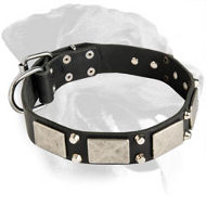 Rottweiler Exclusive Plated Leather Collar