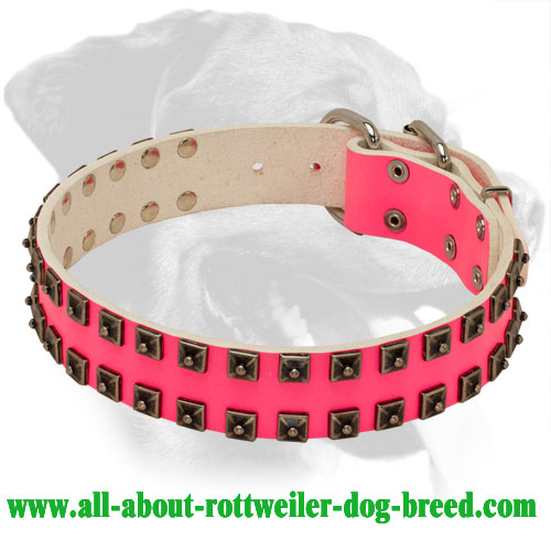 Rottweiler Pink Genuine Leather Studded Collar