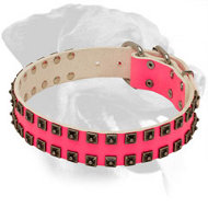 Pink Leather Rottweiler Collar for Walking in Style