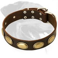 Vintage Leather Collar with oval plates for Rottweiler