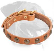 Light-Weight Leather Rottweiler Collar with Half Ball Brass Studs