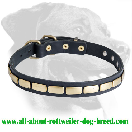 Rottweiler Classy Leather Collar With Plates