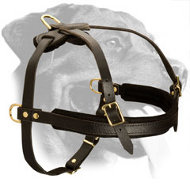Leather Rottweiler Harness for Walking, Training and Pulling