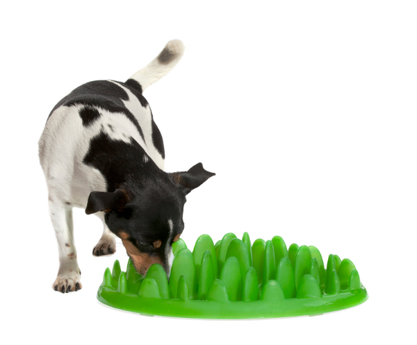 Interactive Green Lawn Plastic Dog Feeder