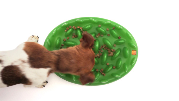 Interactive Hard Plastic Dog Feeder for Wet and Dry Food