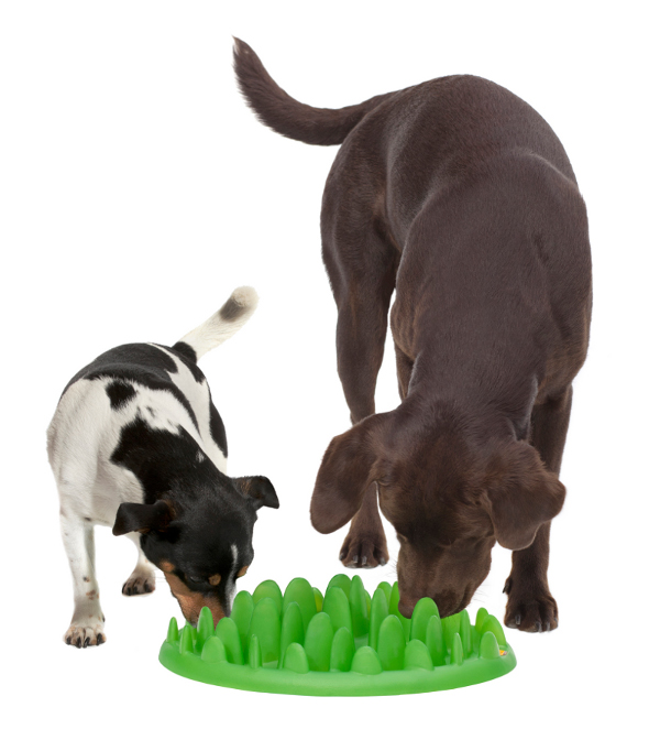 Two Dogs Eating from Interactive Plastic Dog Feeder