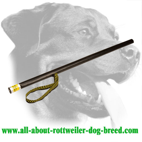 Lightweight Rottweiler Training Stick Made of Leather Covered Plastic