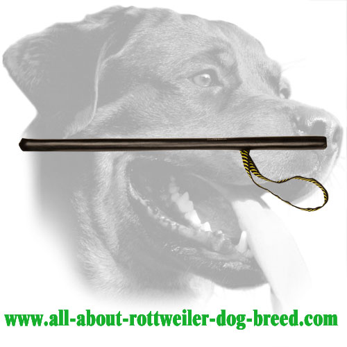 Leather Covered Flexible Rottweiler Training Stick