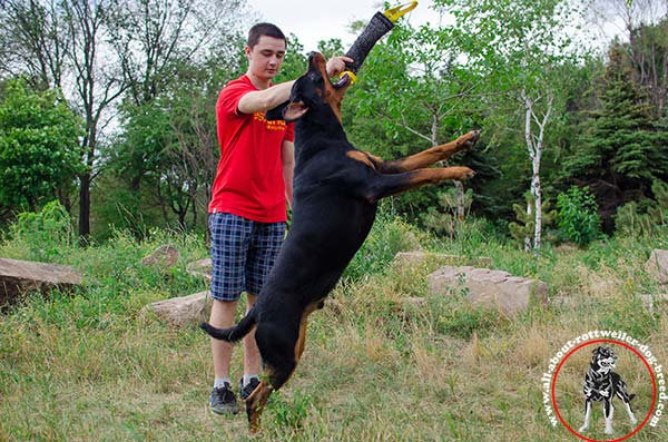 Rottweiler bite-tug handmade with-handles for-training
