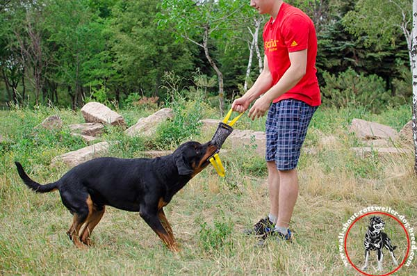 Rottweiler bite-tug high-quality with-handles basic-training