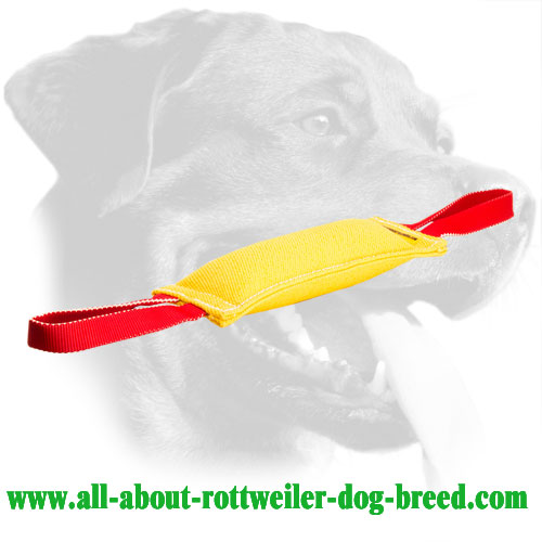 French linen puppy tug for bite training Rottweiler