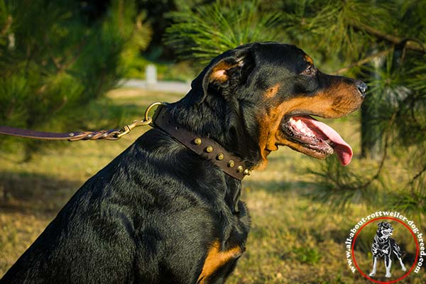 Rottweiler leather leash with duly riveted brass plated hardware for professional use