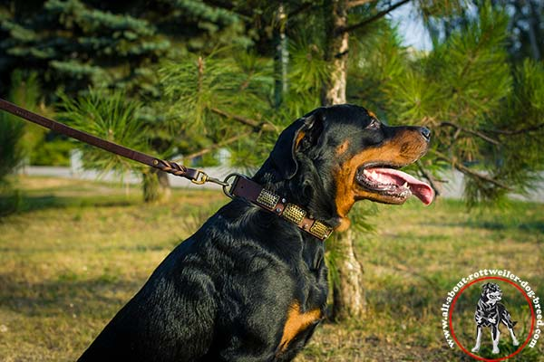 Rottweiler leather leash of high quality brass plated hardware for basic training