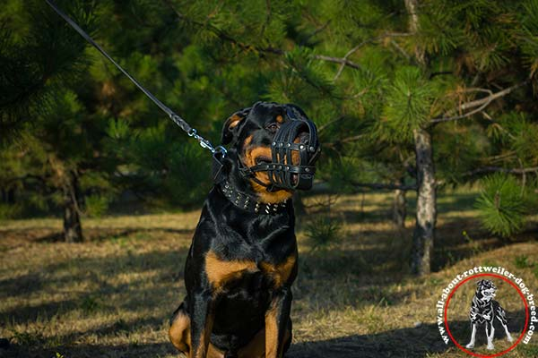 Rottweiler leather leash of genuine materials with nickel plated hardware for professional use