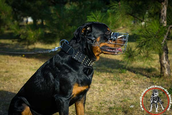 Rottweiler leather leash with strong nickel plated hardware for daily walks