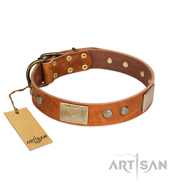 Easy wearing genuine leather dog collar for stylish walking your dog
