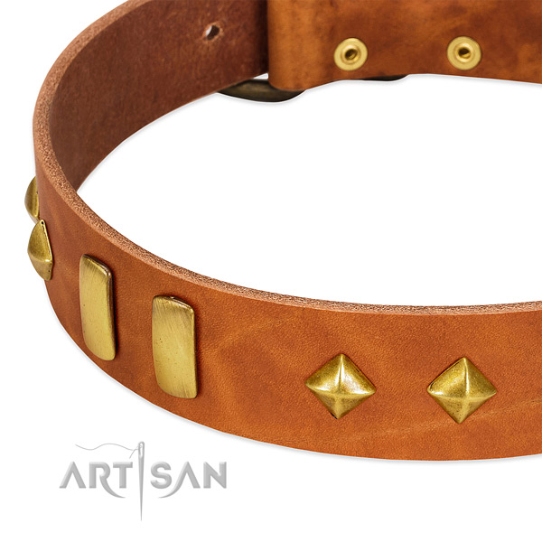 Daily walking natural leather dog collar with impressive adornments