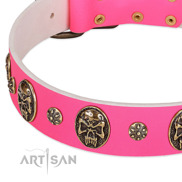 Amazing dog collar created for your impressive canine