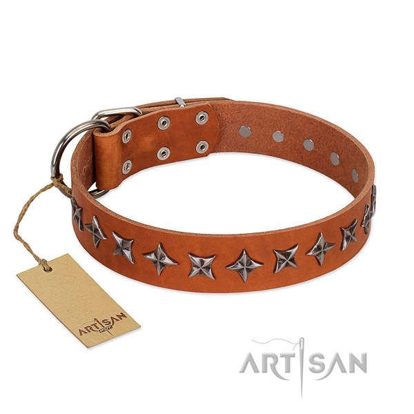 Fancy walking dog collar of quality genuine leather with decorations