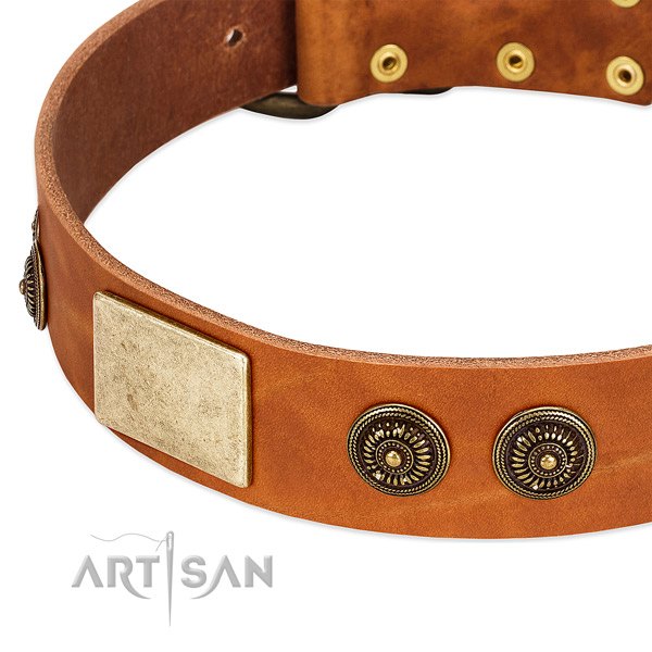 Top notch dog collar crafted for your beautiful doggie