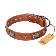 """Sparkling Skull"" FDT Artisan Tan Leather Rottweiler Collar with Old Silver Look Plates and Skulls"