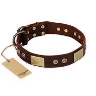 """Shining Armour"" FDT Artisan Brown Leather Rottweiler Collar with Decorations"