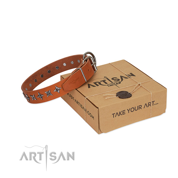 Walking dog collar of finest quality full grain genuine leather with studs