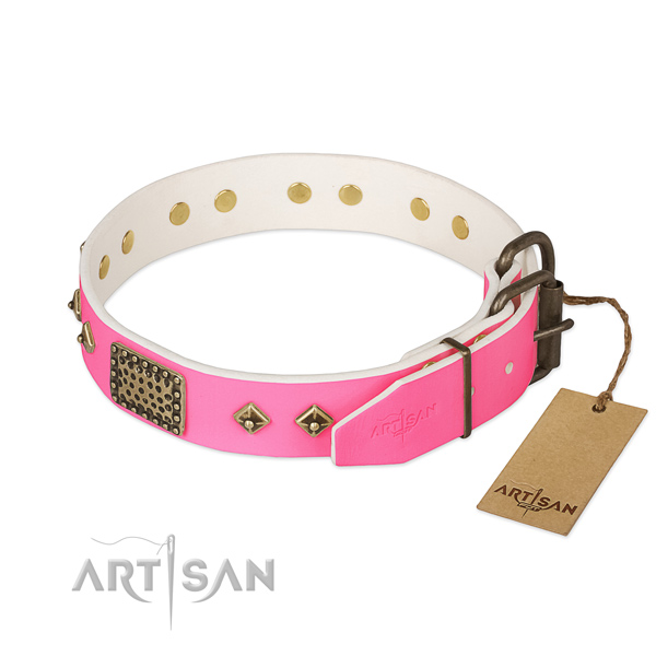 Corrosion proof traditional buckle on everyday walking dog collar