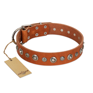 """Gorgeous Roundie"" FDT Artisan Tan Leather Rottweiler Collar with Chrome-plated Circles"