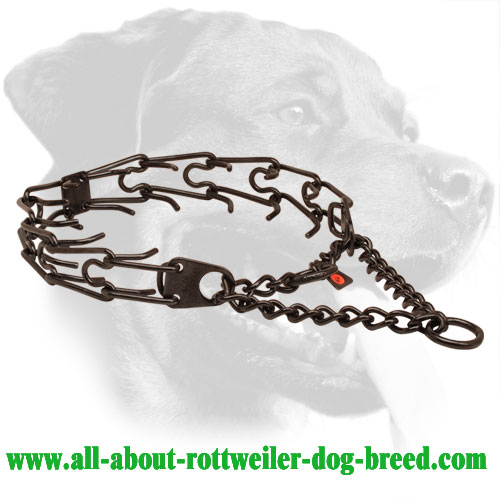 Black stainless steel pinch collar for badly behaved pets