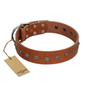 """Daintiness"" Designer Handmade FDT Artisan Tan Leather Rottweiler Collar with Silver-Like Adornment"