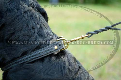 Brass Plated D-Ring on Hand Braided Leather Dog Collar
