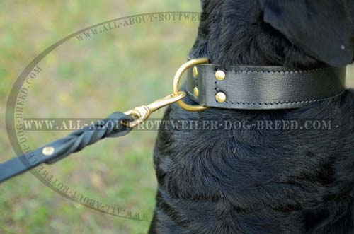 Rottweiler Durable Training Leather Collar