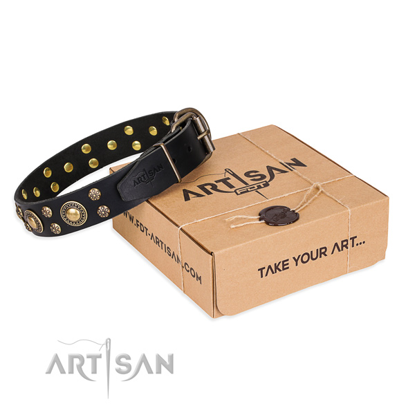 Day-to-day leather dog collar with stunning decorations