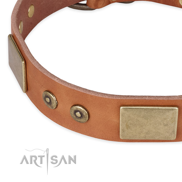 Everyday walking leather collar with rust-proof buckle and D-ring