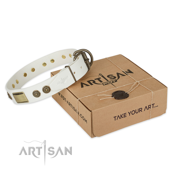 Finest quality full grain genuine leather dog collar for stylish walking
