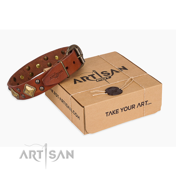 Fashionable genuine leather dog collar for everyday walking
