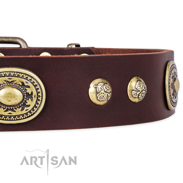Daily use leather collar with corrosion resistant buckle and D-ring