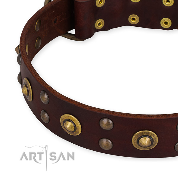 Easy to use leather dog collar with resistant durable fittings